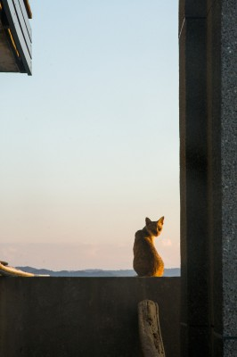 cat-3383378_1920