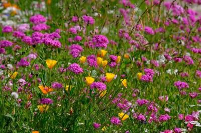 flower-abundance-5389705_1280
