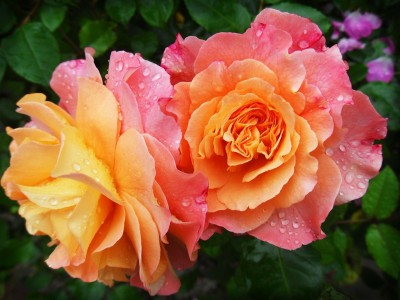 flowers-174817_1920